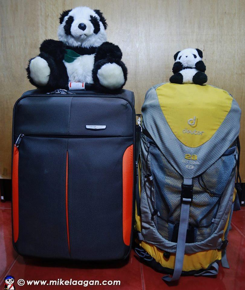 traveling panda